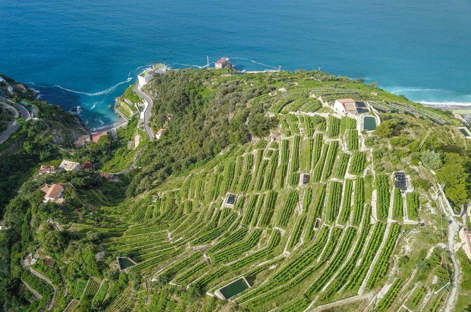 organic vineyard estates for sale