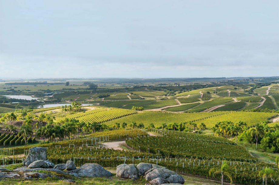 Bodega Garzon, Uruguay wines