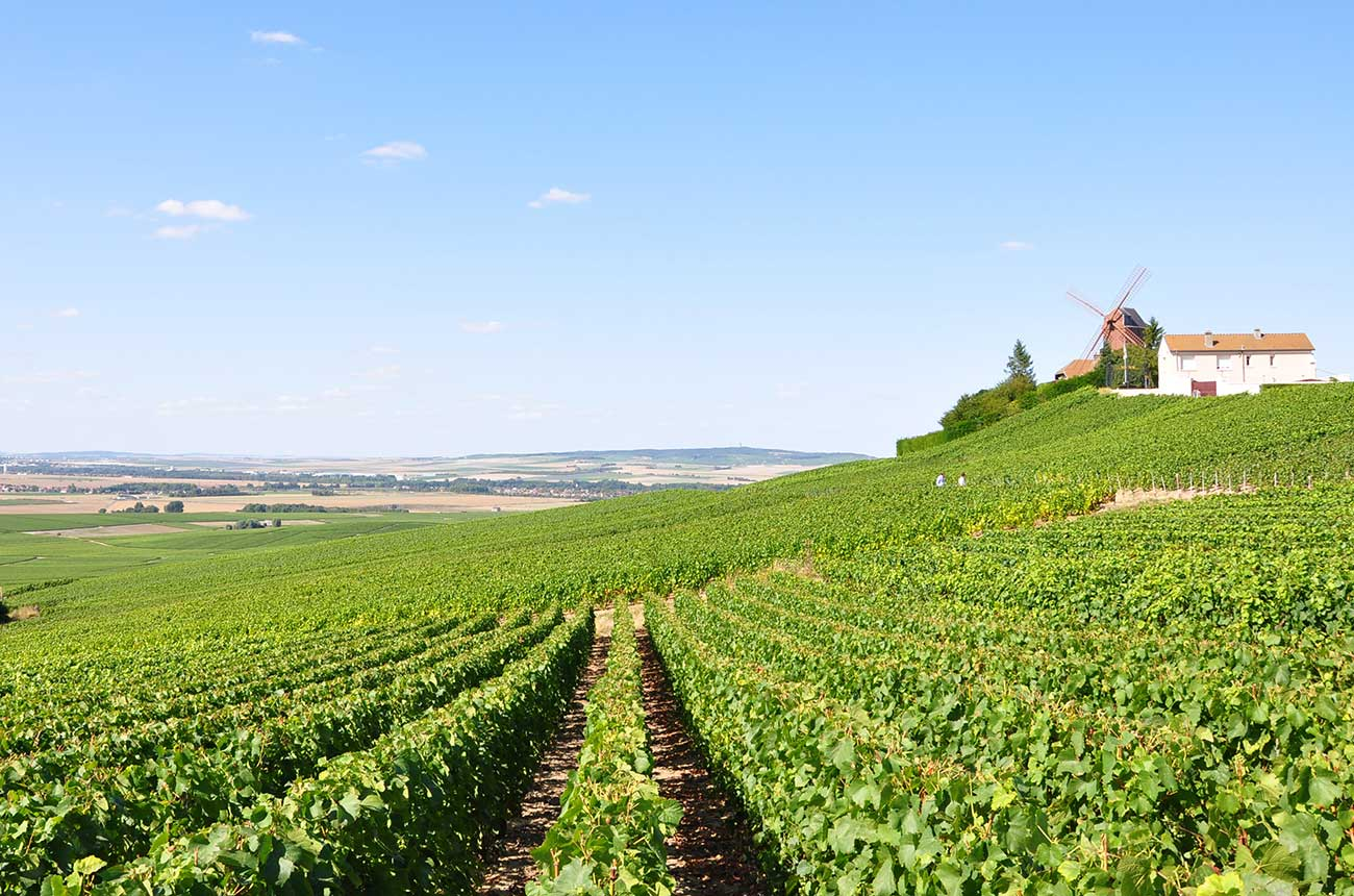 Champagne 2020 to make rare 'trilogy' of top vintages - Decanter