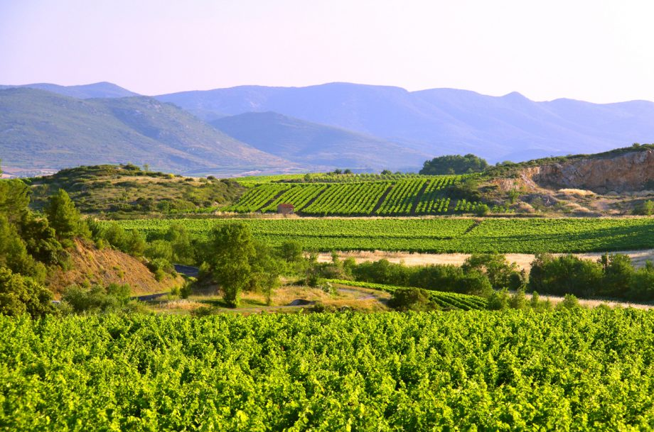 Foncalieu Languedoc Cazoul