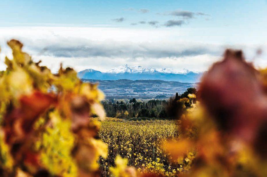 Maison Ventenac vineyards