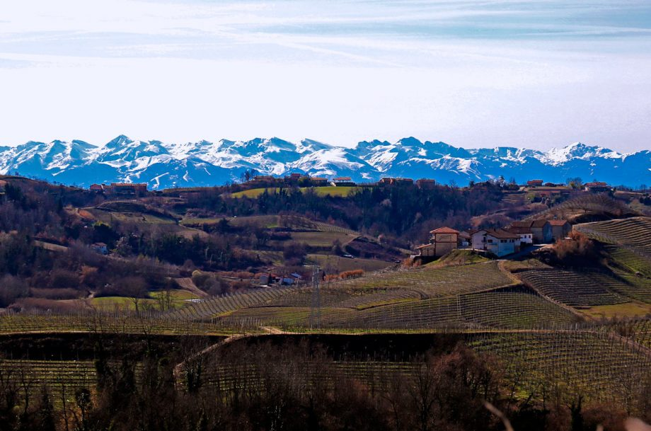 Piedmont White Wines Roero