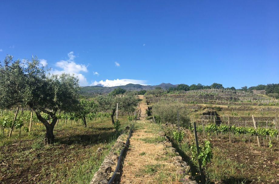 Torre Mora vineyard, Sicily