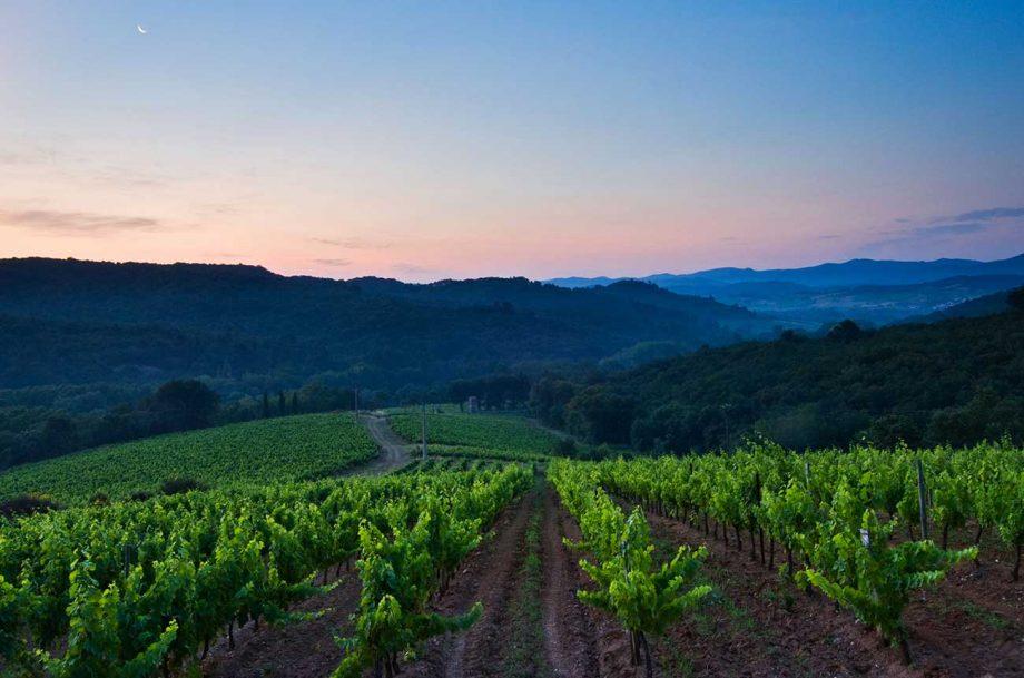 Buy French vineyards