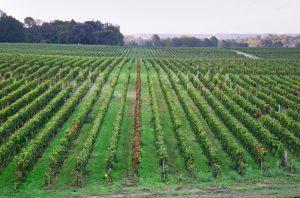 Chateau Smith Haut Lafitte, Pessac Leognan, Bordeaux dry white wines