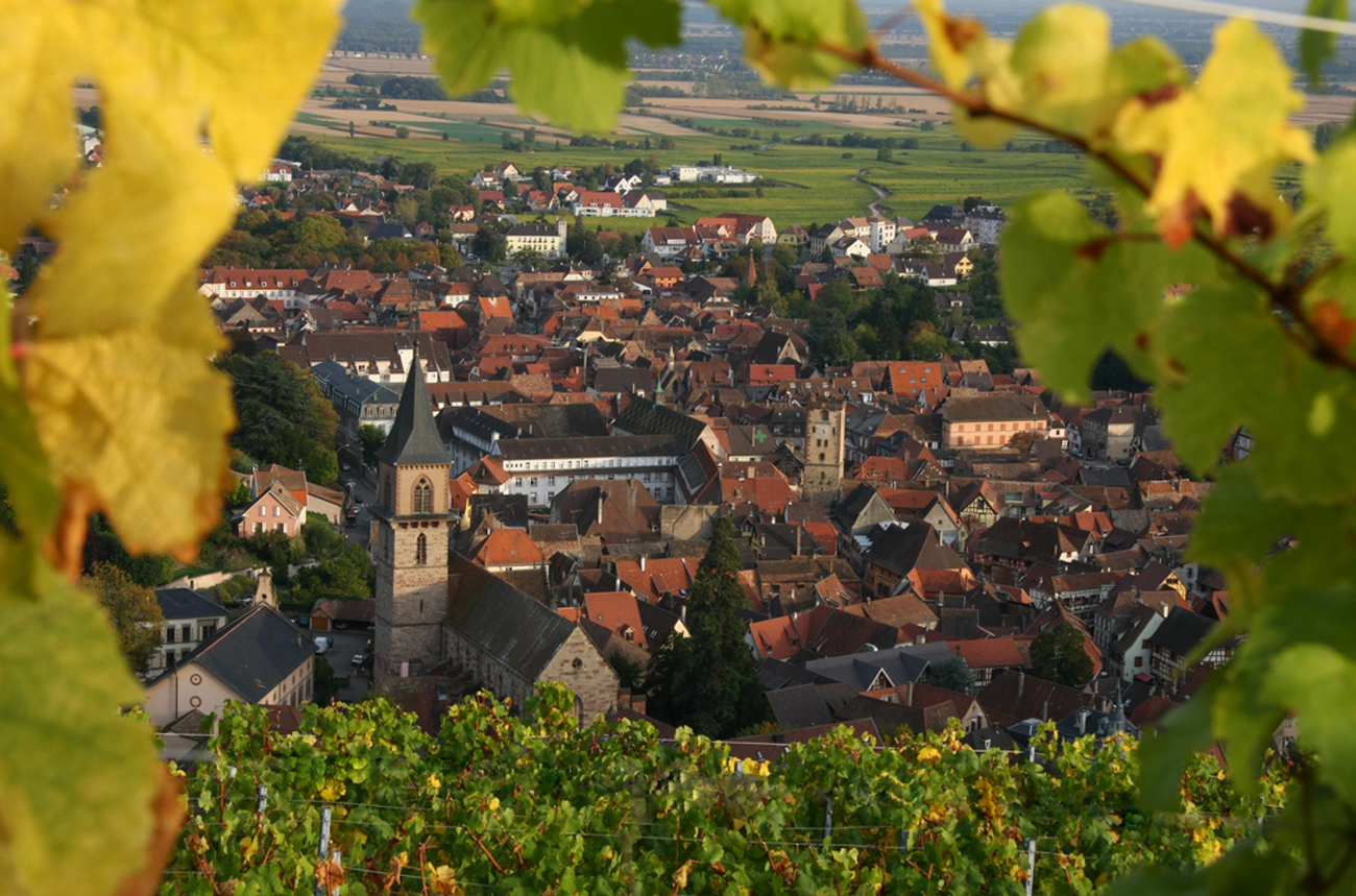 Domaine Jean Sipp: Unlocking Alsace's potential - Decanter