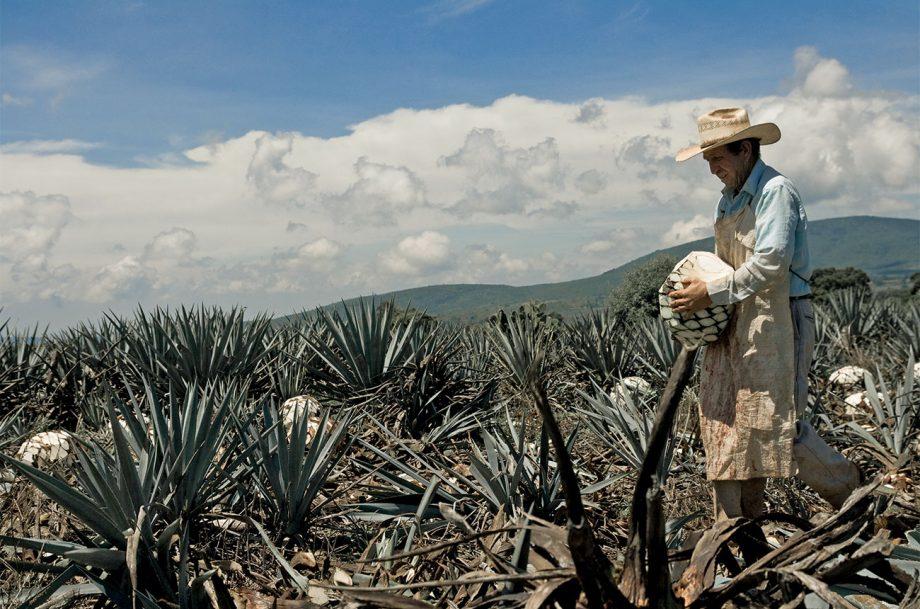 Las Pomez estate, tequila terroir