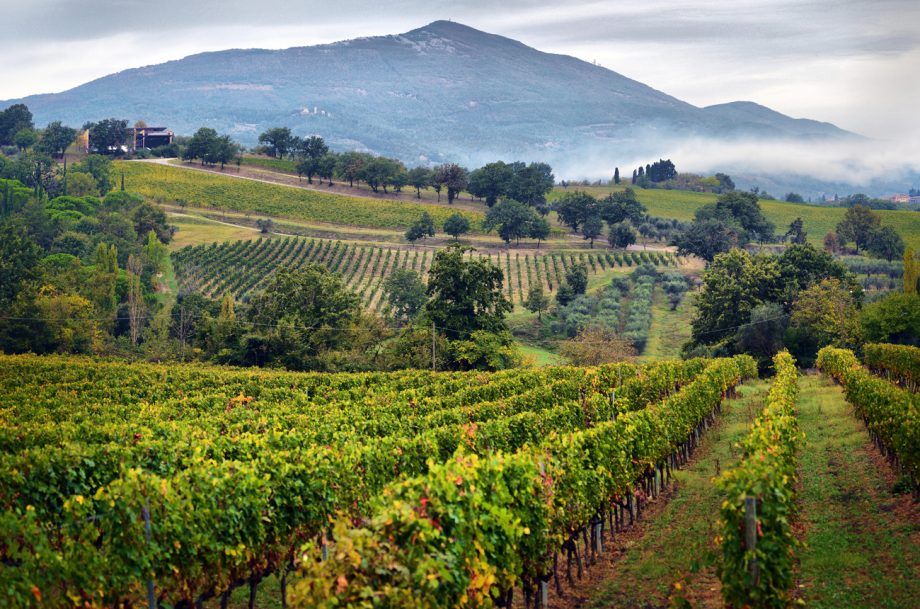 Tuscany vineyards, September releases Italy