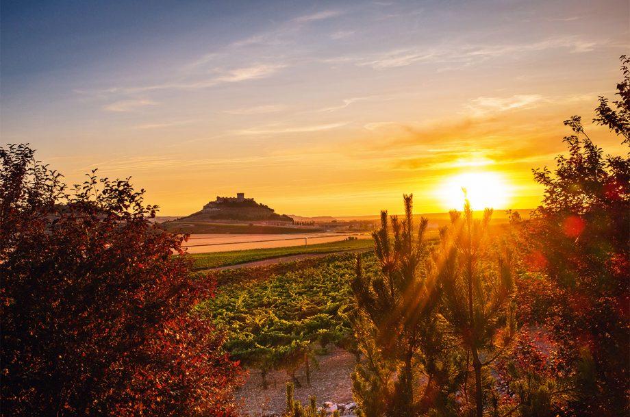 Vineyards in Ribera del Duero