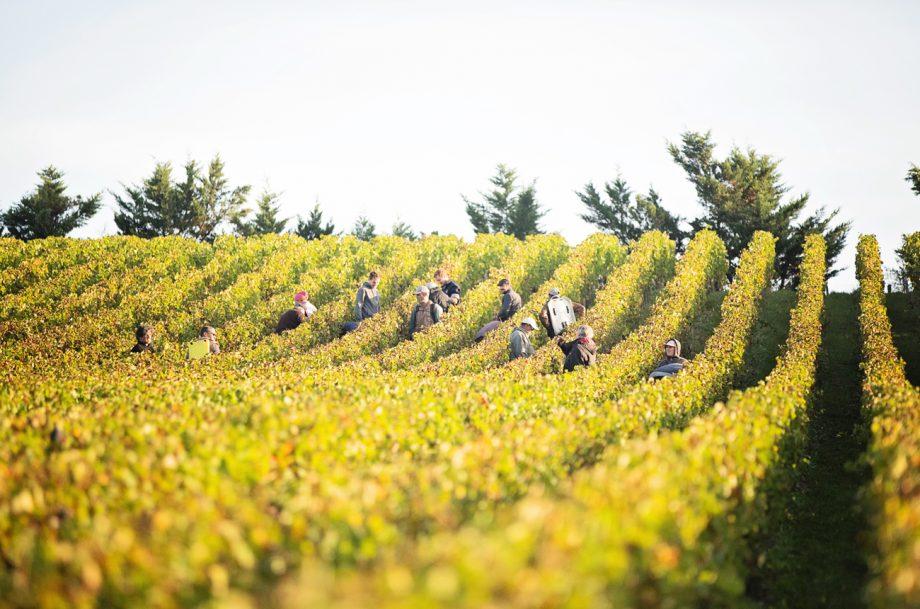 Bordeaux 2020 harvest