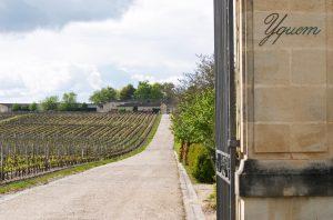 Chateau d'Yqueum, Place de Bordeaux wines