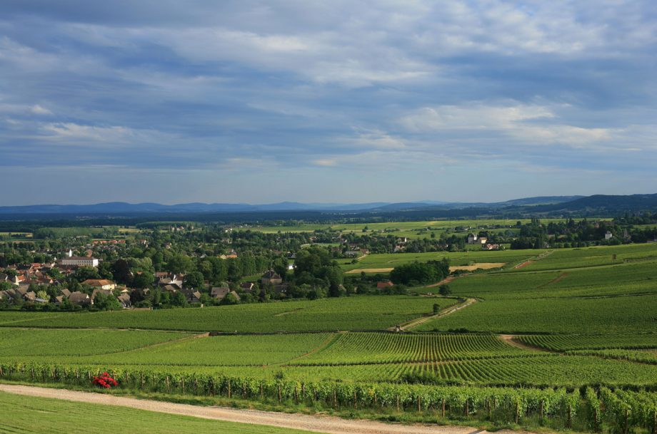 Givry vineyards, Cellier Aux Moines