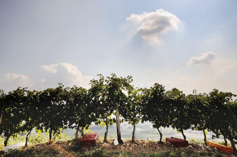 Italy Harvest 2020