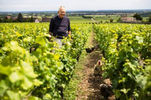 Michel Lafarge in the vineyard in Volnay. Domaine Michel Lafarge