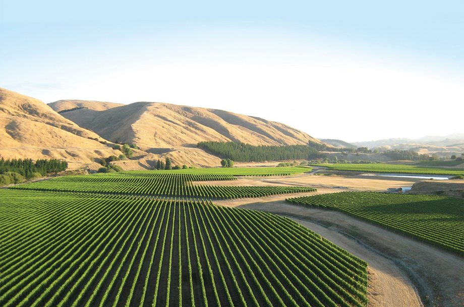 Te Muna Road vineyard
