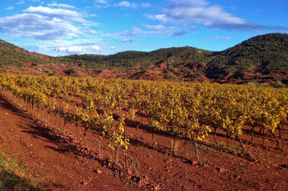Vineyard Terrasses du Larzac