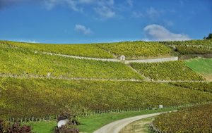 Chablis 2019: Full vintage report and top-scoring wines
