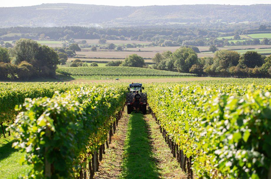 Roebuck Estates vineyards