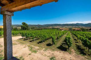 Sardinia vineyard property