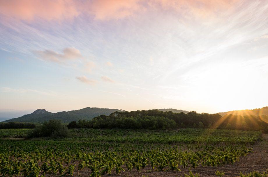 Domaine de l'Ile vineyard parcel