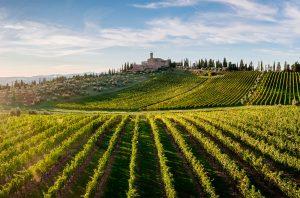 Banfi vineyards