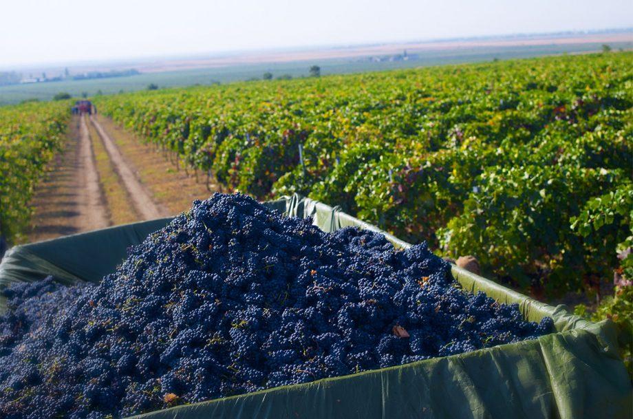Iconic Estate harvest