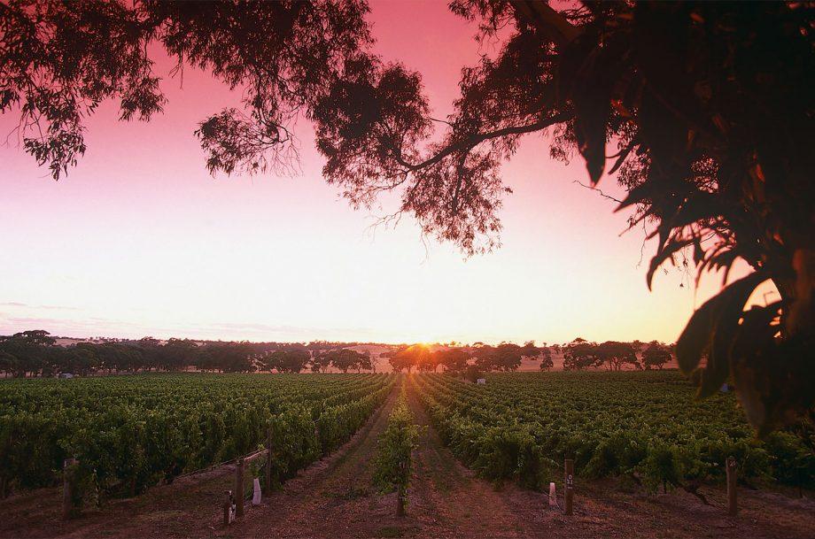 Mount Edelstone vineyard