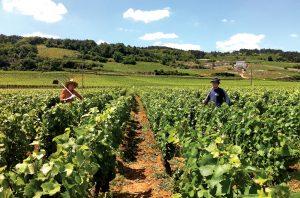 Domaine Ballorin vineyards
