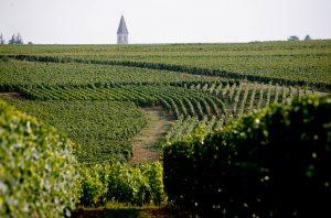 Vosne Romanee vineyard