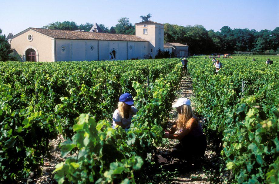 Chateau Haut Brion vineyard