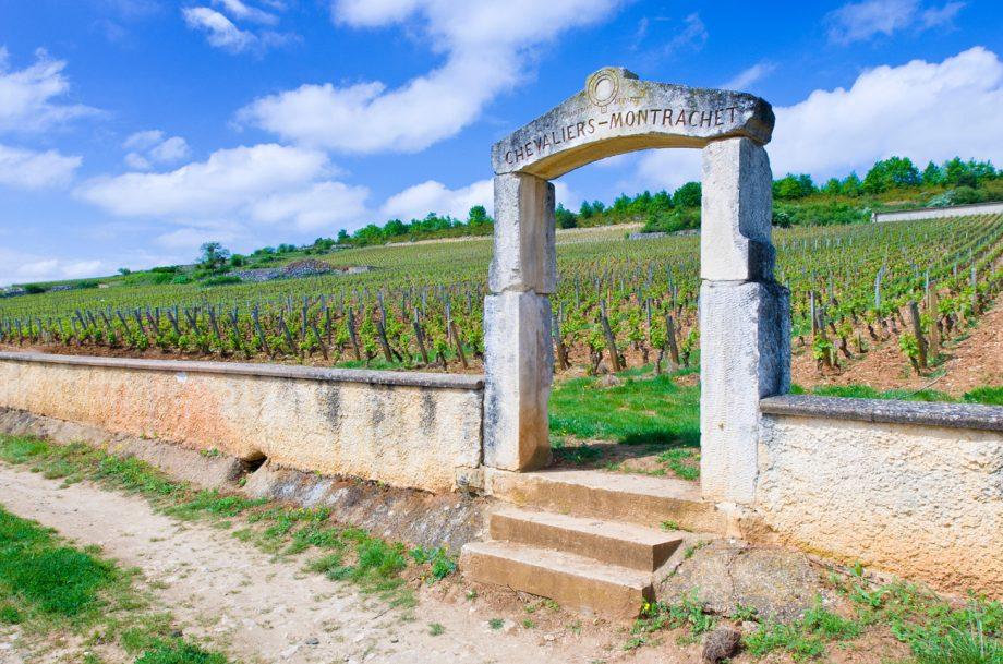 Chevalier-Montrachet vineyards in Puligny-Montrachet