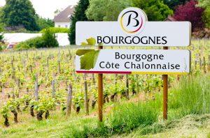 Vineyards of the Côte Chalonnaise region