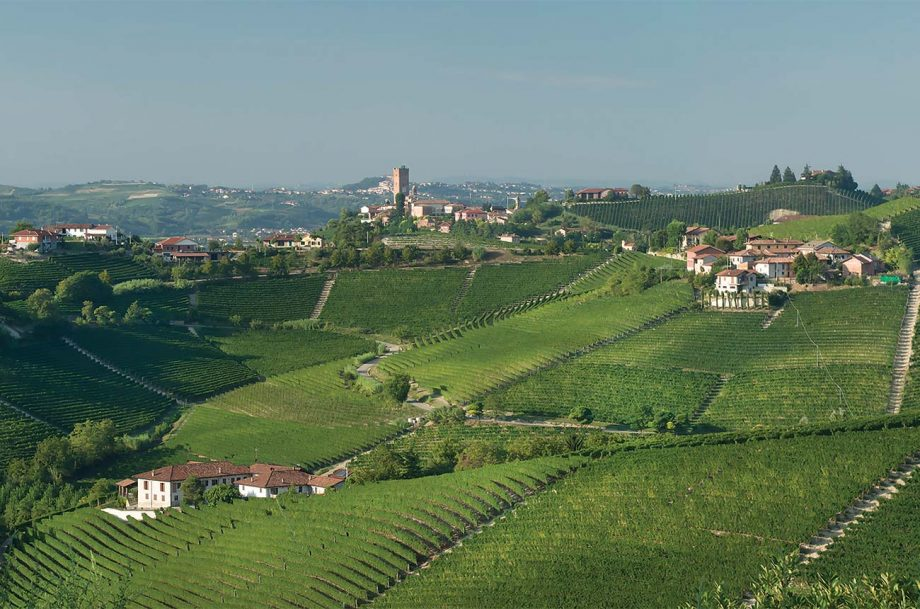 Barolo vineyard