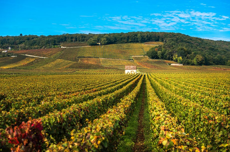 Vineyards in the autumn season