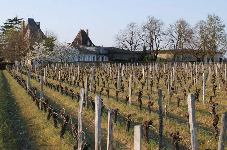 Vieux Chateau Certan vineyard Pomerol