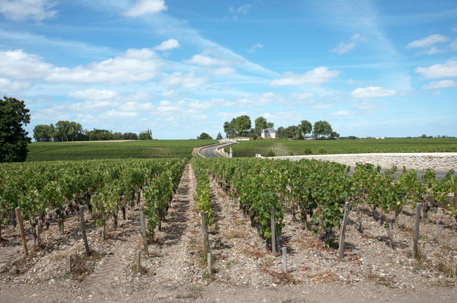 Bordeaux Left Bank 2018, Pauillac vineyards