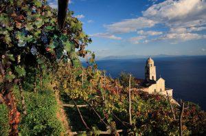 Campania Vineyards