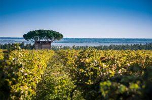 Costieres de Nimes vineyard