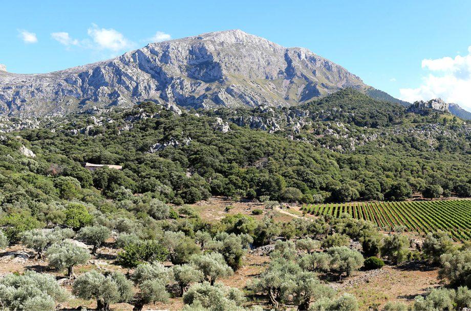 Mortitx Mallorca vineyards