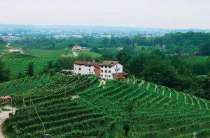 Dei Zago Prosecco vineyards
