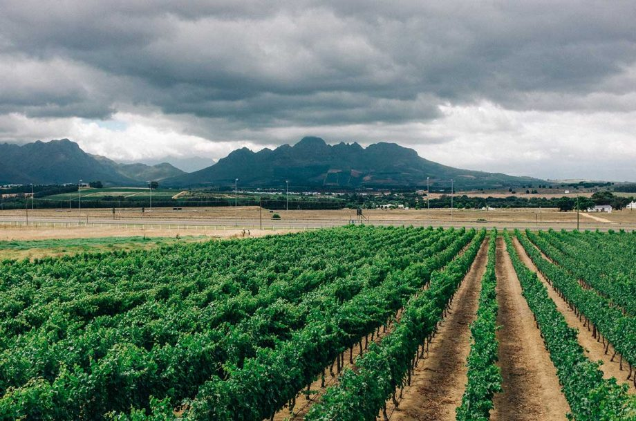 south africa lifts alcohol ban, wineries react