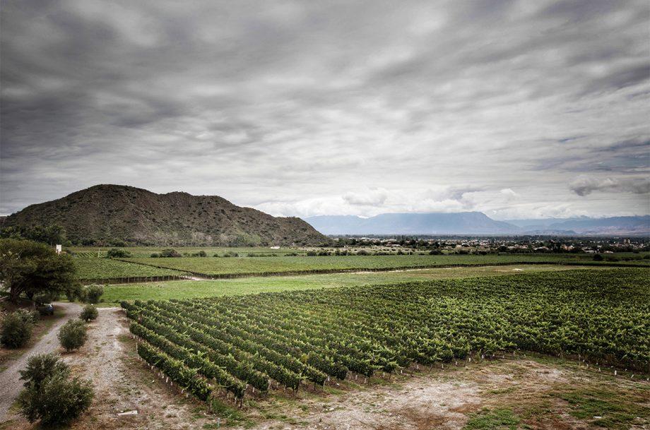 Amalaya vineyards