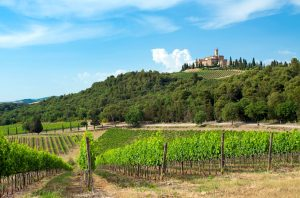 Castello Banfi wines Producer Profile