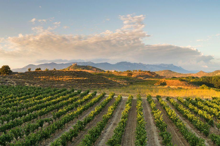 Ramon Bilbao vineyards