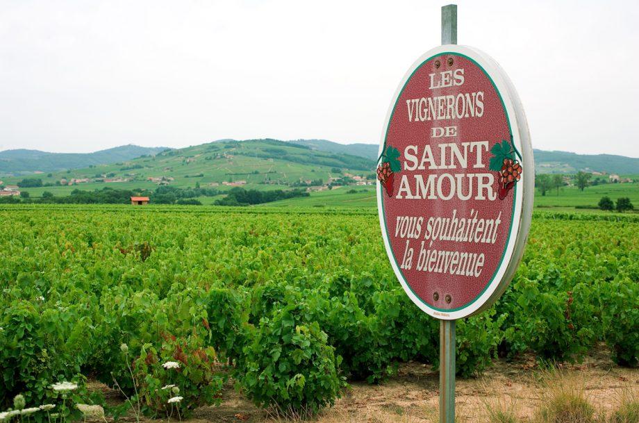 Saint Amour Beaujolais wine country