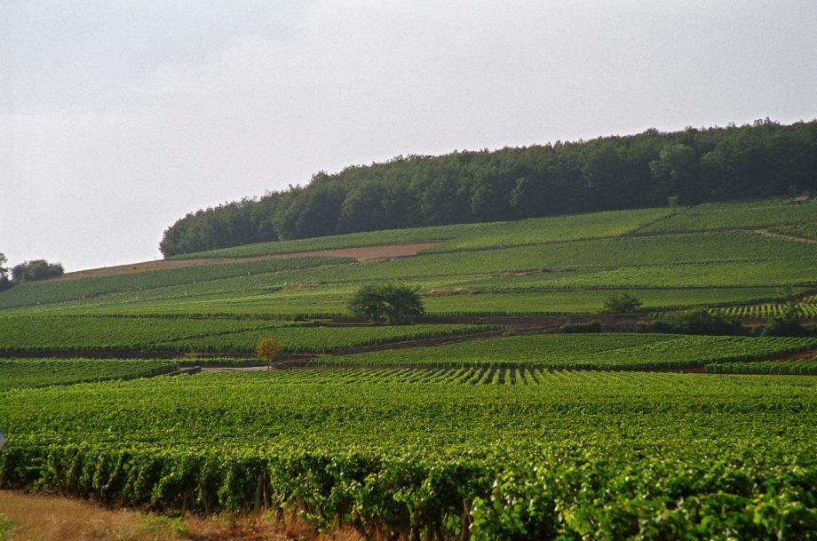 Corton hill