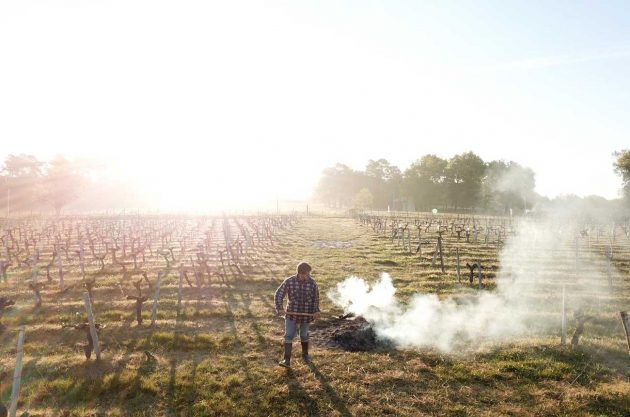 Checking vineyards for frost damage in Bordeaux