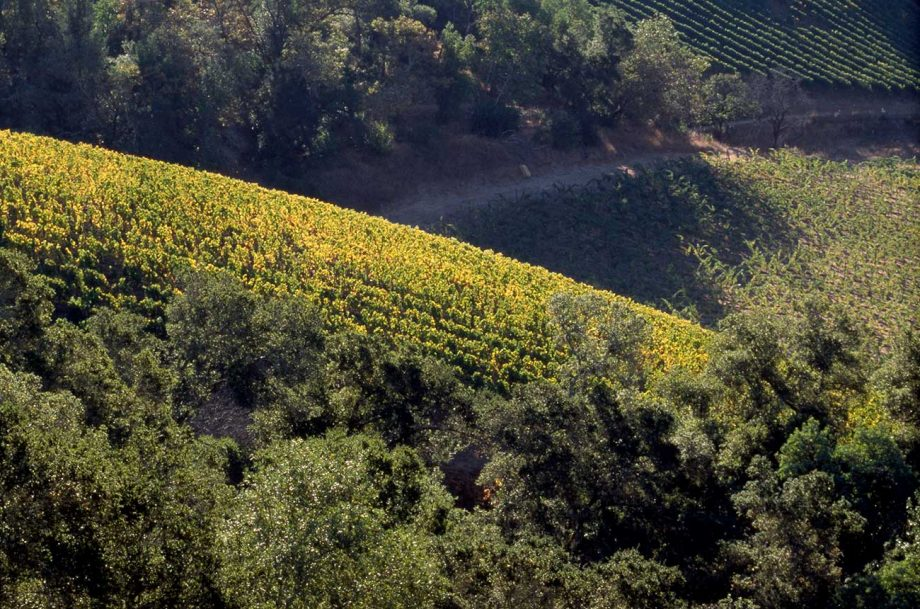Harlan Estate vineyard, which will now be overseen by new MD Will Harlan.