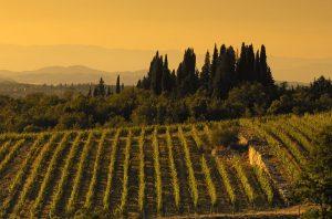 Isole e Olena wines