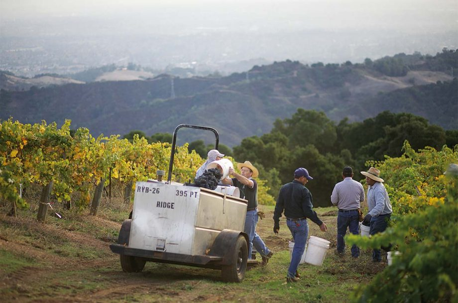 Investing in California wine